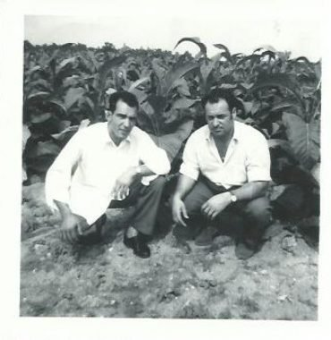 Workers at a Tobacco Plantation in Brantford